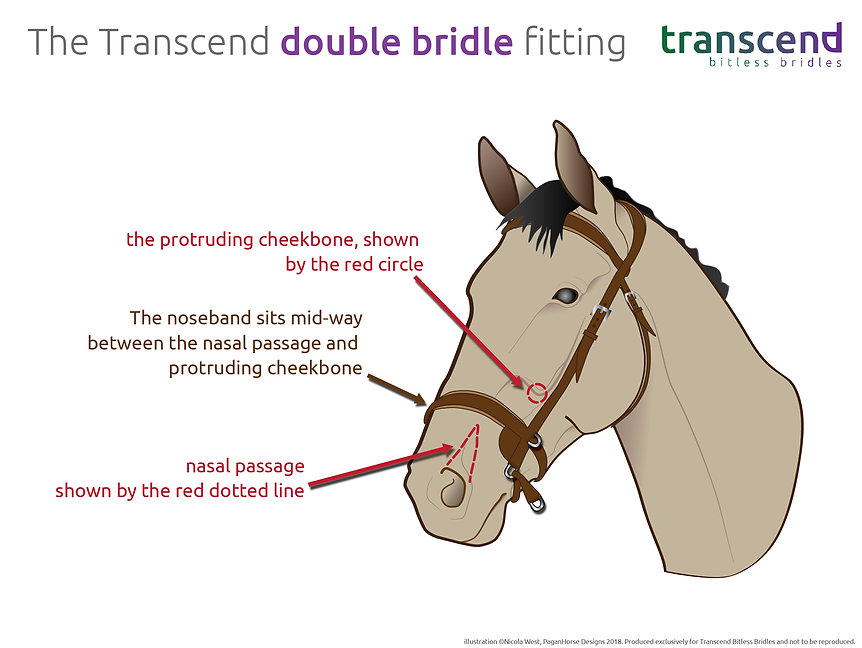 fitting the transcend - double-01.jpg