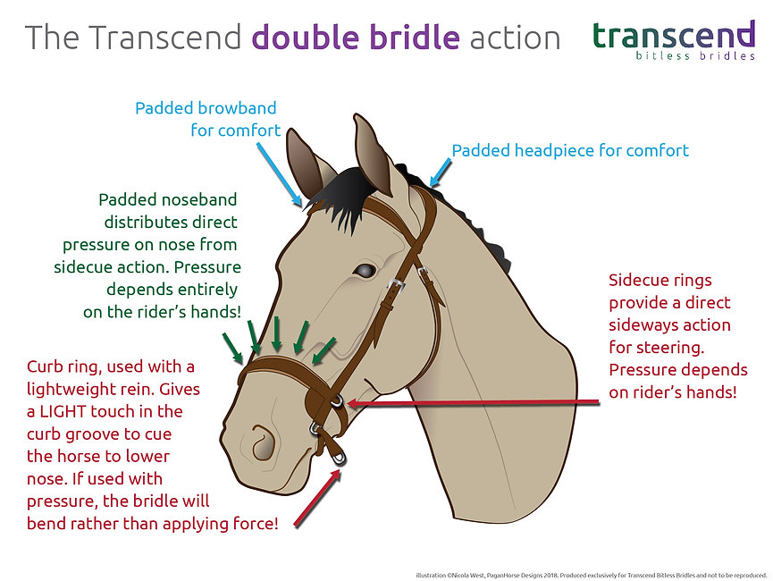action of the transcend - double-01.jpg