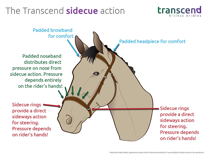 action of the transcend - sidecue-01.jpg