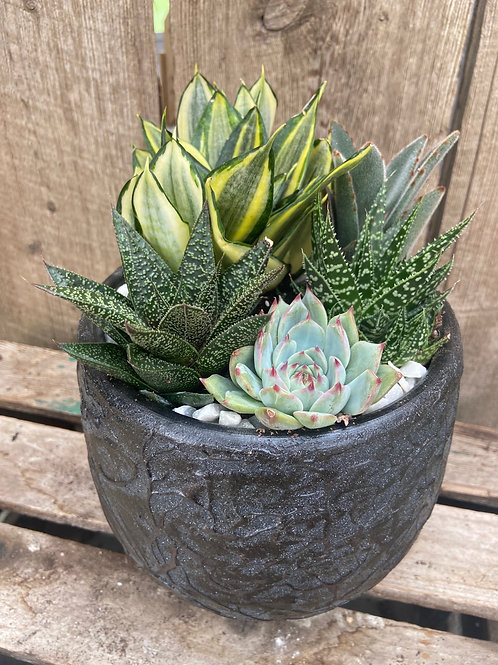Black Rock Succulent Planter