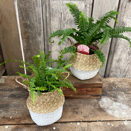 Seagrass Fern Basket