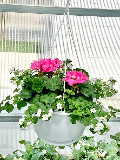HangingBasket - Pink Geranium