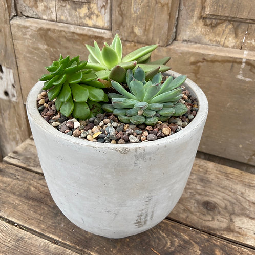 Succulent Planter in Ceramic Pot