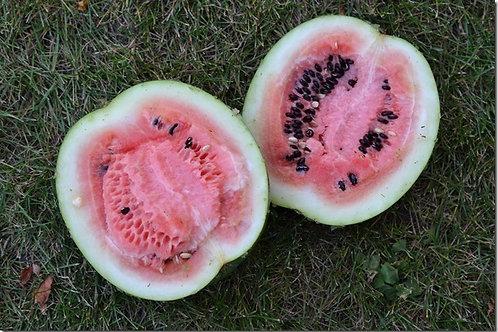 Oyali Watermelon
