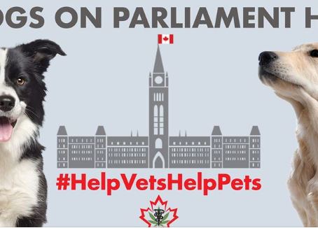 Dogs on Parliament Hill