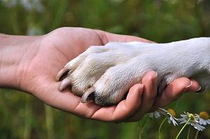 Paw in hand.jpg