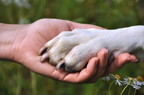 Paw in hand.jpg
