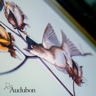 Audubon Square Projects 1.png