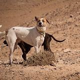 dogs-2645618_1920.jpg