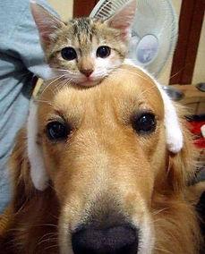 חתול על כלב.jpg