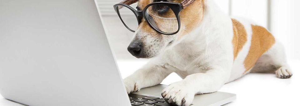 התנדבות עם כלבים sos