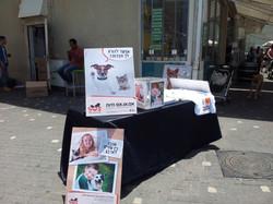 אימוץ כלבים בתל אביב