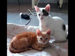 באנג׳ו ורוקו