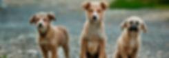 עיקור וסירוס חתולים וכלבים.  אלפי כלבים וחתולים נולדים מידי שנה, ואין להם דורש. רבים מהם מושלכים לרחוב, נדרסים, מושמדים או מתים ממחלות ומרעב. רבים רוצים לעזור להם אך לא יודעים כיצד. אחת הדרכים היעילות ביותר לעזרה הינה עיקור וסירוס