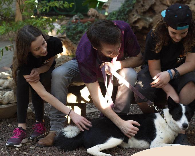 התנדבות עם כלבים