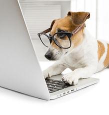 כלב מחשב.jpg