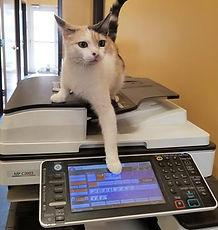 חתול משרד.jpg
