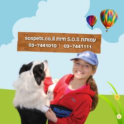 Dogcenter-FB-Ads_2