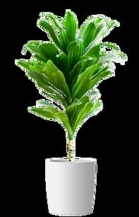 צמח 1.png