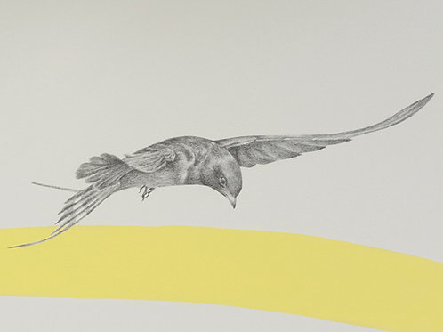 Renée A Fox. Songs of Freedom (Swallow 7) 2019. Graphite on Pellon.