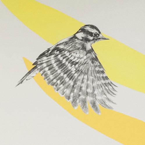 Renée A Fox. Songs of Freedom (Downy Woodpecker 4) 2019. Graphite on Pellon.