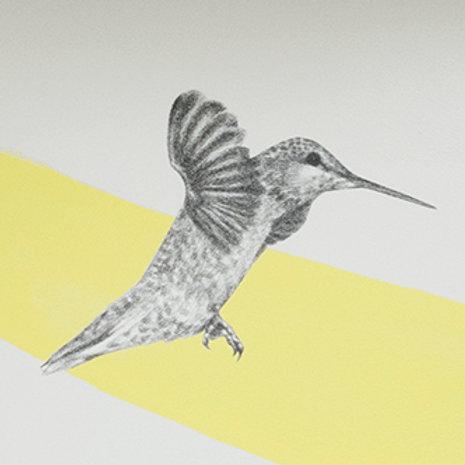 Renée A Fox. Songs of Freedom (Hummingbird 1) 2019. Graphite on Pellon.