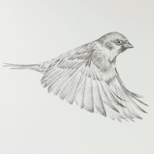 Renée A Fox. Songs of Freedom (Sparrow 3) 2019. Graphite on Pellon.