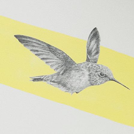 Renée A Fox. Songs of Freedom (Hummingbird 2) 2019. Graphite on Pellon.