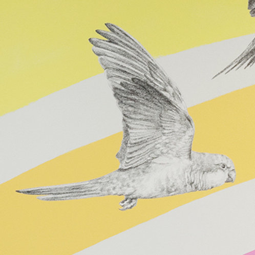 Renée A Fox. Songs of Freedom (Parrot 4) 2019. Graphite on Pellon.