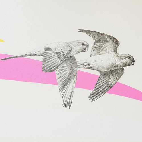 Renée A Fox. Songs of Freedom (Parrots 7+8) 2019. Graphite on Pellon.