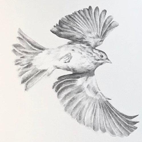 Renée A Fox. Songs of Freedom (Sparrow 2), 2019. Graphite on Pellon.