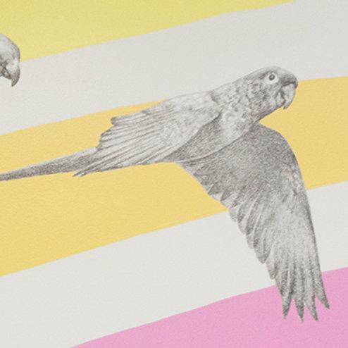 Renée A Fox. Songs of Freedom (Parrot 6) 2019. Graphite on Pellon.