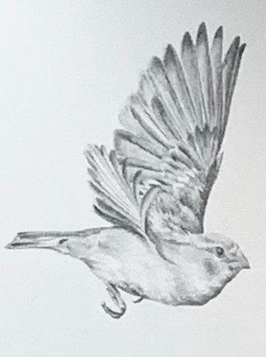 Renée A Fox. Songs of Freedom (Sparrow 3), 2019. Archival Giclée print.