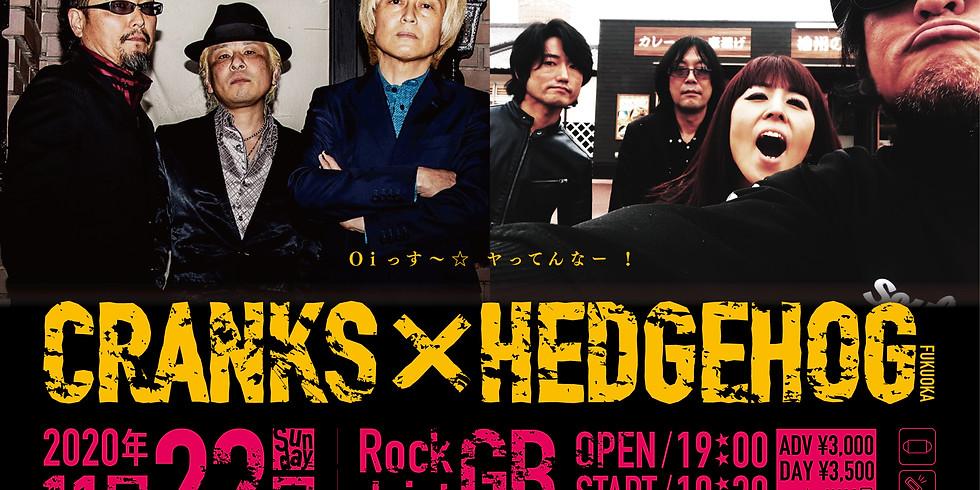 「CRANKS × HEDGEHOG」