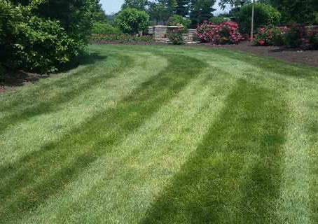 Beauitful back yard mowing job!