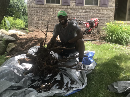 Pulling out tree roots