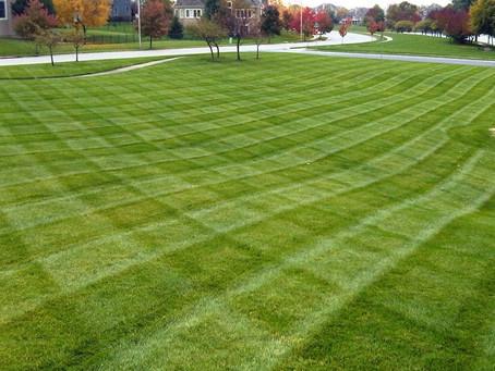 Checker striped lawn freshly cut!