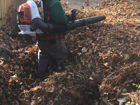 Fall clean up (Back Yard)