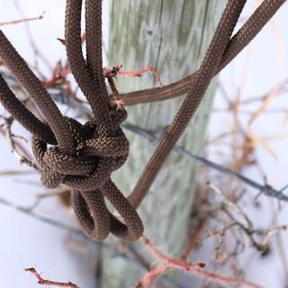 brown knot.JPG