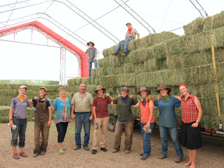 2,300 Square Bales