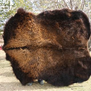 Bison hide fur.JPG