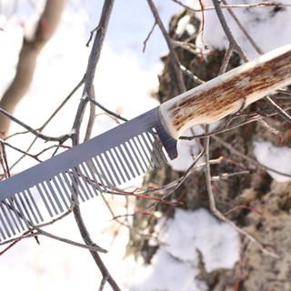comb in tree.JPG