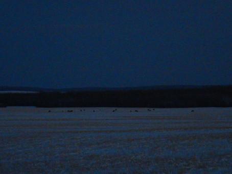 Nordic Shadows - a poem