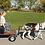 Thumbnail: Ivan: A Pulling Goat+Cart+Harness