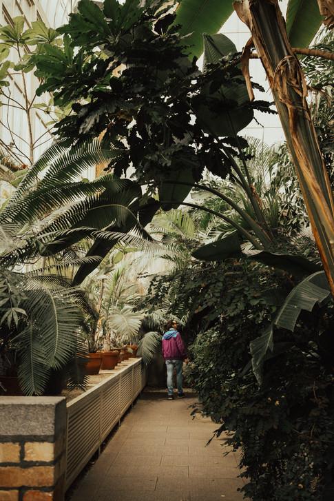 Botanical-04.jpg