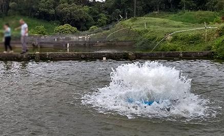 Splash5-ai