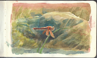 dragonfly sketch 2016