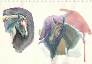 horses head study 2014