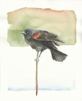 red winged blackbird 2016