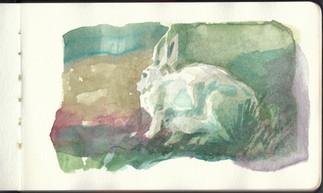 bunny sketch 2016